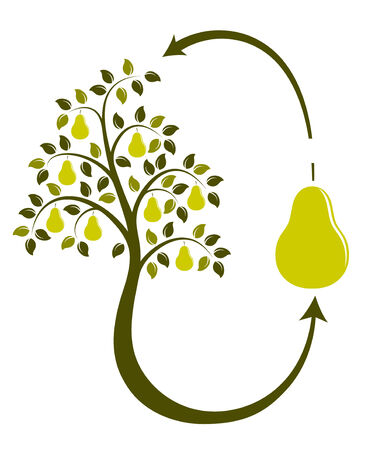 pear tree life cycle on white background