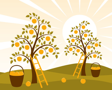 fall harvest: vector background with apple trees and baskets of apples