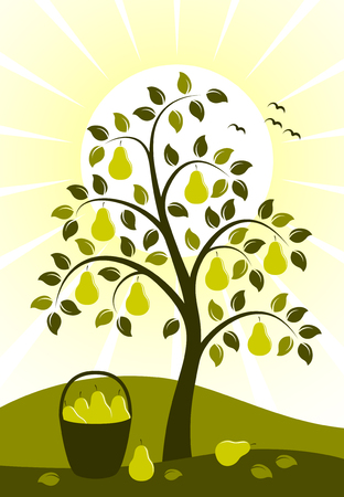 vector background with pear tree and basket of pears Vector