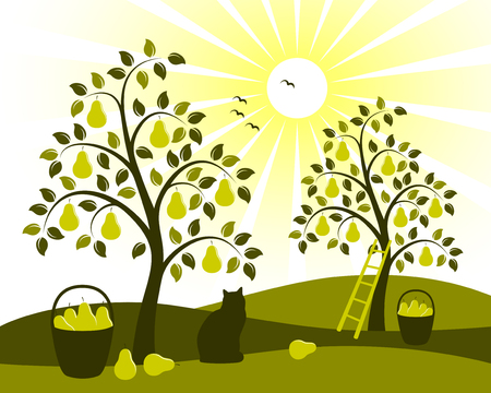 pear tree orchard Vector