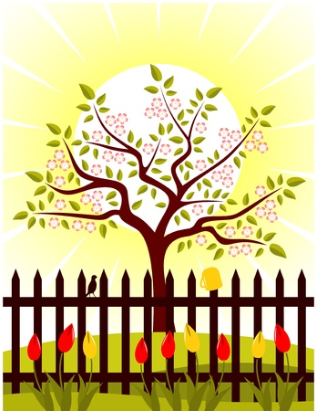 vector flowering tree and picket fence with tulips Stock Vector - 8802020