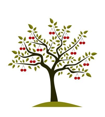 arbol cerezo: Cerezo abstracta sobre fondo blanco