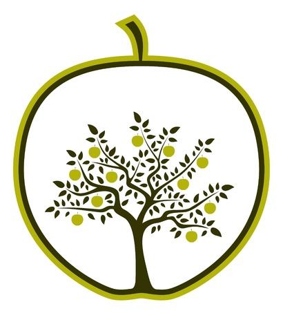 arbol de manzanas: Manzano en apple sobre fondo blanco