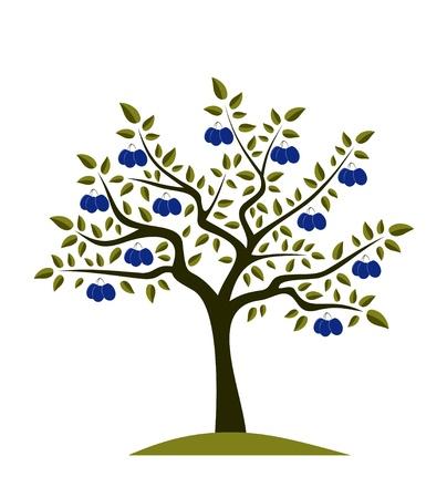 Pruimenboom op witte achtergrond