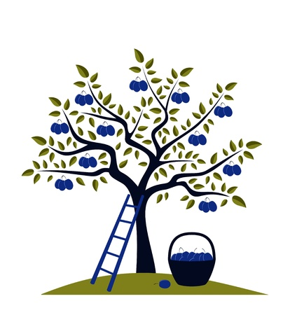 plum tree, ladder and basket of plums Illustration