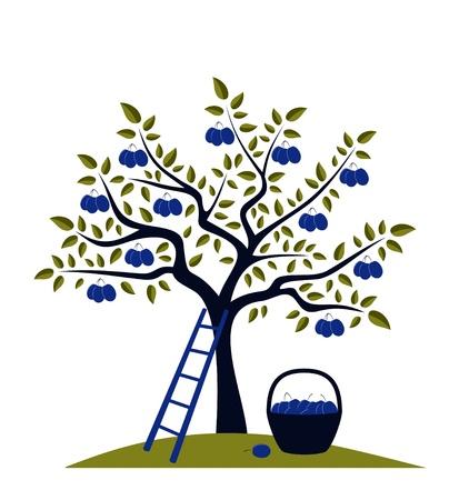 Pruimenboom, ladder en mand van pruimen Stock Illustratie