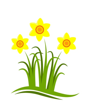 vector abstract daffodils on white background Stock Vector - 9059650