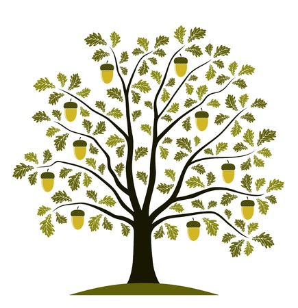 oak tree on white background Vector