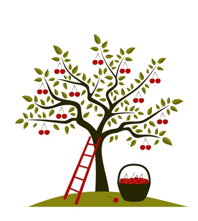 orchard: cherry tree, ladder and basket of cherries