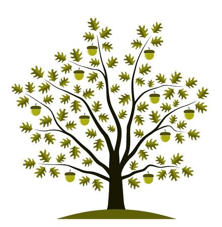 oak tree on white background Illustration