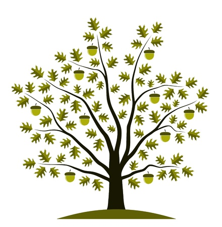 oak tree on white background Ilustracja