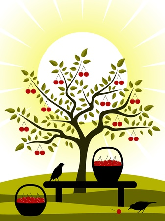 cherry harvest Vector