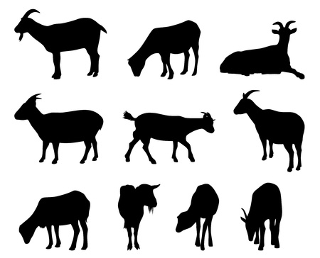 barn black and white: goat silhouettes Illustration