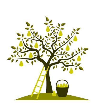 pear tree, ladder and basket of pears Illustration