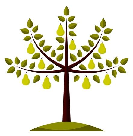 poires: arbre de PEAR sur fond blanc Illustration