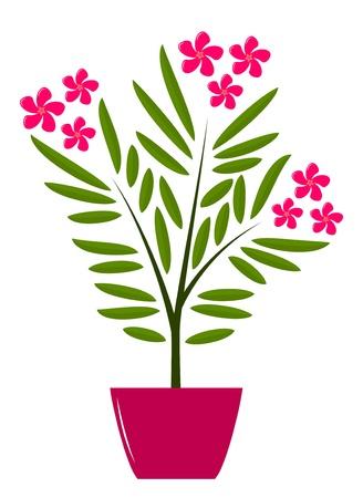 oleander: oleander in pot on white background Illustration
