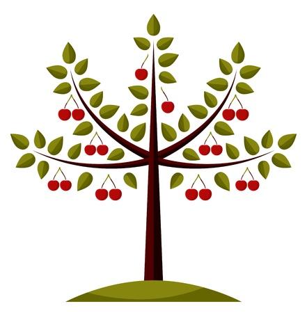 cherry tree on white background Illustration