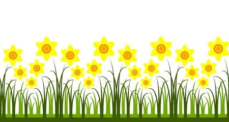 seamless daffodils border Vector