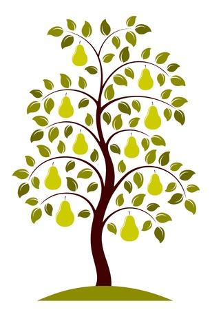 梨: 白い背景の上ベクトル梨の木
