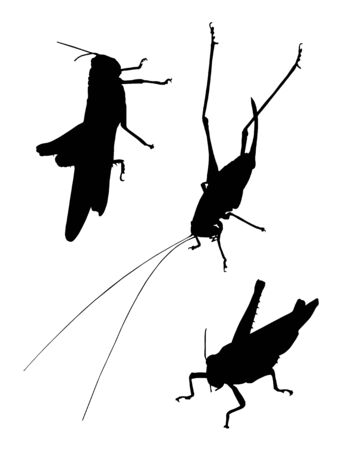 cricket insect: grasshopper silhouettes on white background