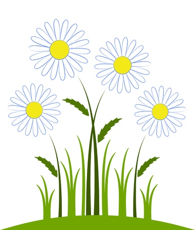 white daisy: vector daisies on white background Illustration