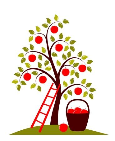 arbol de manzanas: vector de manzano, una escalera y una cesta de manzanas Vectores