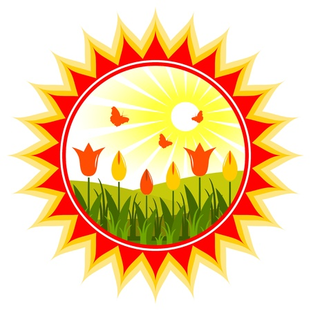 vector tulips in sun on white background Vector
