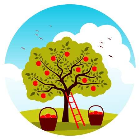 apple tree, ladder and baskets of apples Vector