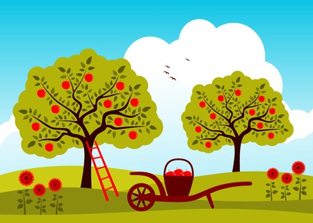 agriculture landscape: vector hand barrow with basket of apples in apple tree orchard