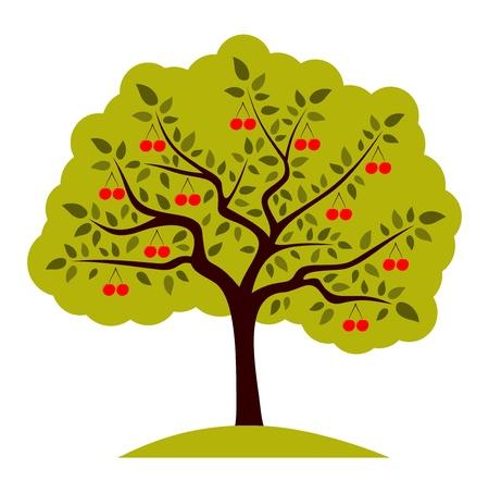 arbol de cerezo: árbol abstracto de cereza en el fondo blanco