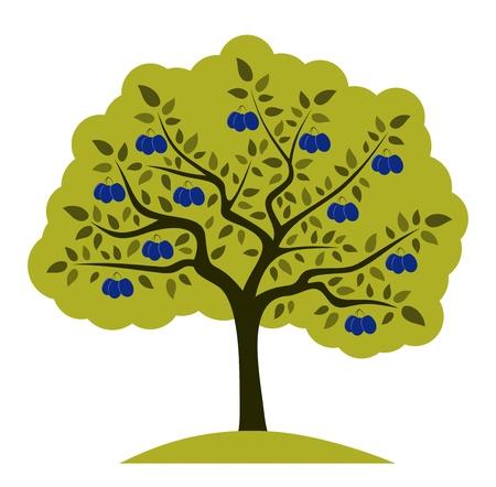 Vektor Pflaumenbaum auf weißem Hintergrund
