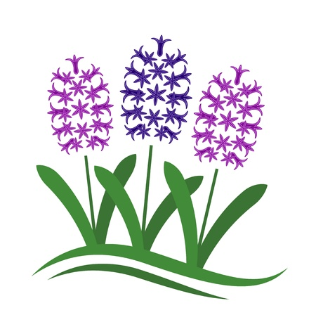 vector abstract hyacinths on white background