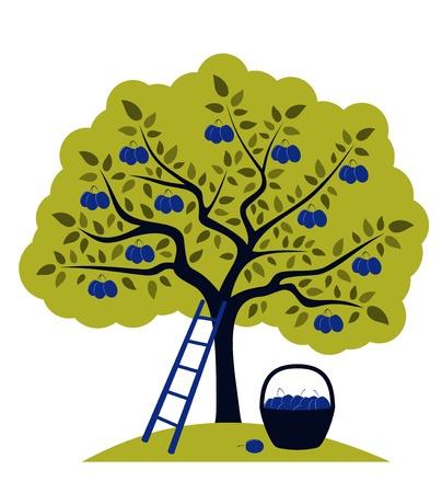 vector Pflaumenbaum, Leiter und Korb mit Pflaumen