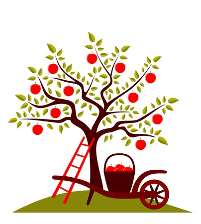 orchard:  apple tree and hand barrow with basket of apples