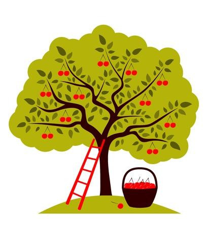 Cerezo, la escalera y una cesta de cerezas