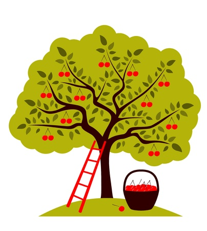 Cherry tree, ladder and basket of cherries Vector