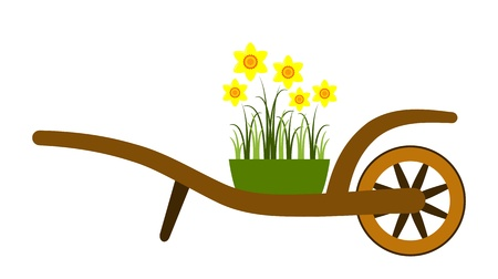 hand barrow and daffodils isolated on white background Stock Vector - 14546494