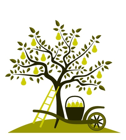 pear tree and hand barrow with basket of pears