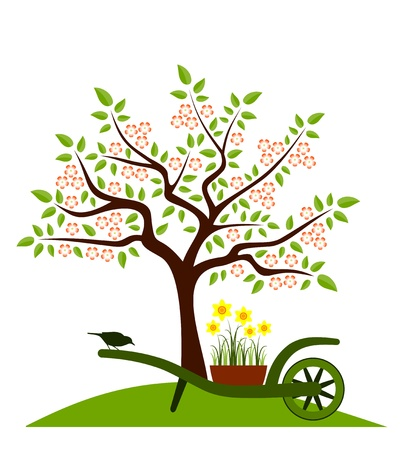 garden design: flowering tree and hand barrow with daffodils isolated on white background