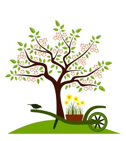 carretilla: la floraci�n de �rboles y de la mano con la carretilla de narcisos aislados sobre fondo blanco