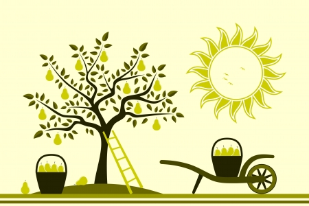 vector pear tree and hand barrow with basket of pears Stock Vector - 14731952