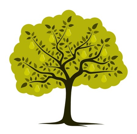 pear tree isolated on white background  Vector