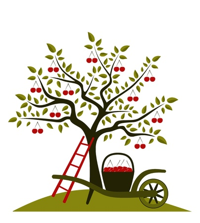 orchard: vector cherry tree and hand barrow with basket of cherries Illustration