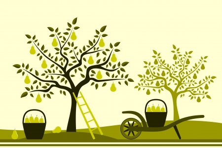 hand barrow with basket of pears in pear orchard Vector