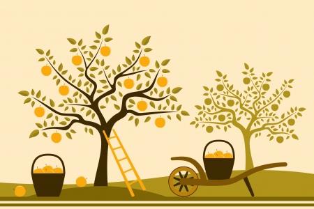 canasta de frutas: carretilla de mano con la cesta de manzanas en el huerto de manzanas Vectores