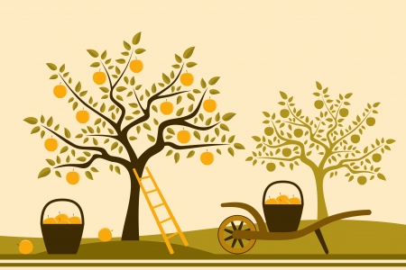 hand barrow with basket of apples in apple orchard Vector