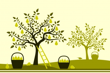 baskets of pears in pear orchard Stock Vector - 15505392
