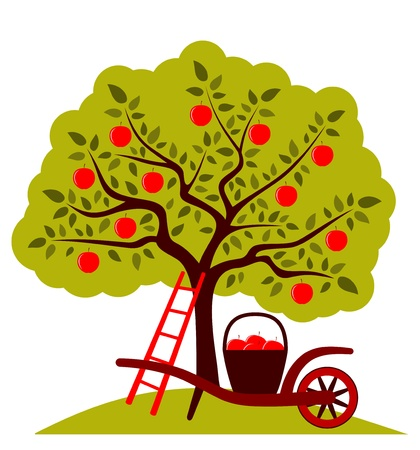 orchard: apple tree and hand barrow with basket of apples isolated on white background