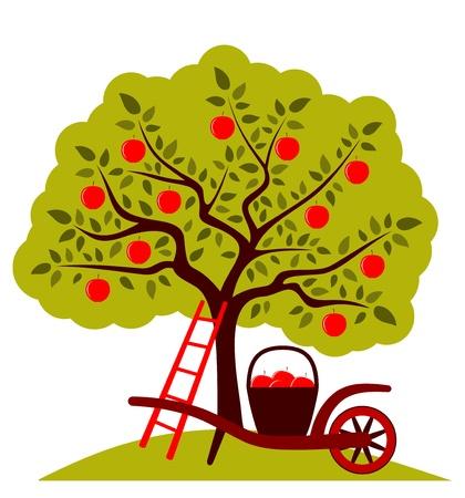 carretilla: manzano y carretilla de mano con la cesta de manzanas aisladas sobre fondo blanco