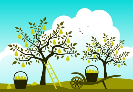 vector hand barrow with basket of pears in pear orchard Stock Vector - 15363269